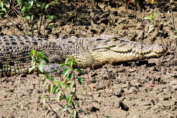 Bhitarkanika National Park with Puri and Bhubaneswar Tour